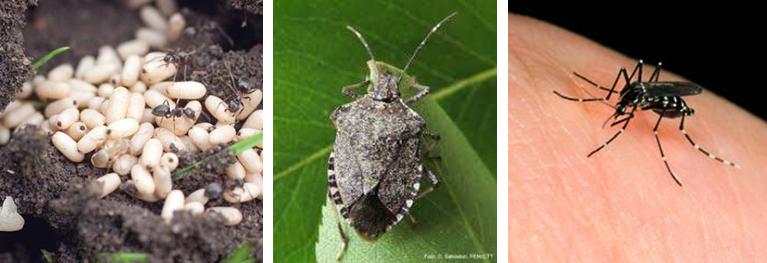 insetticidi per giardino