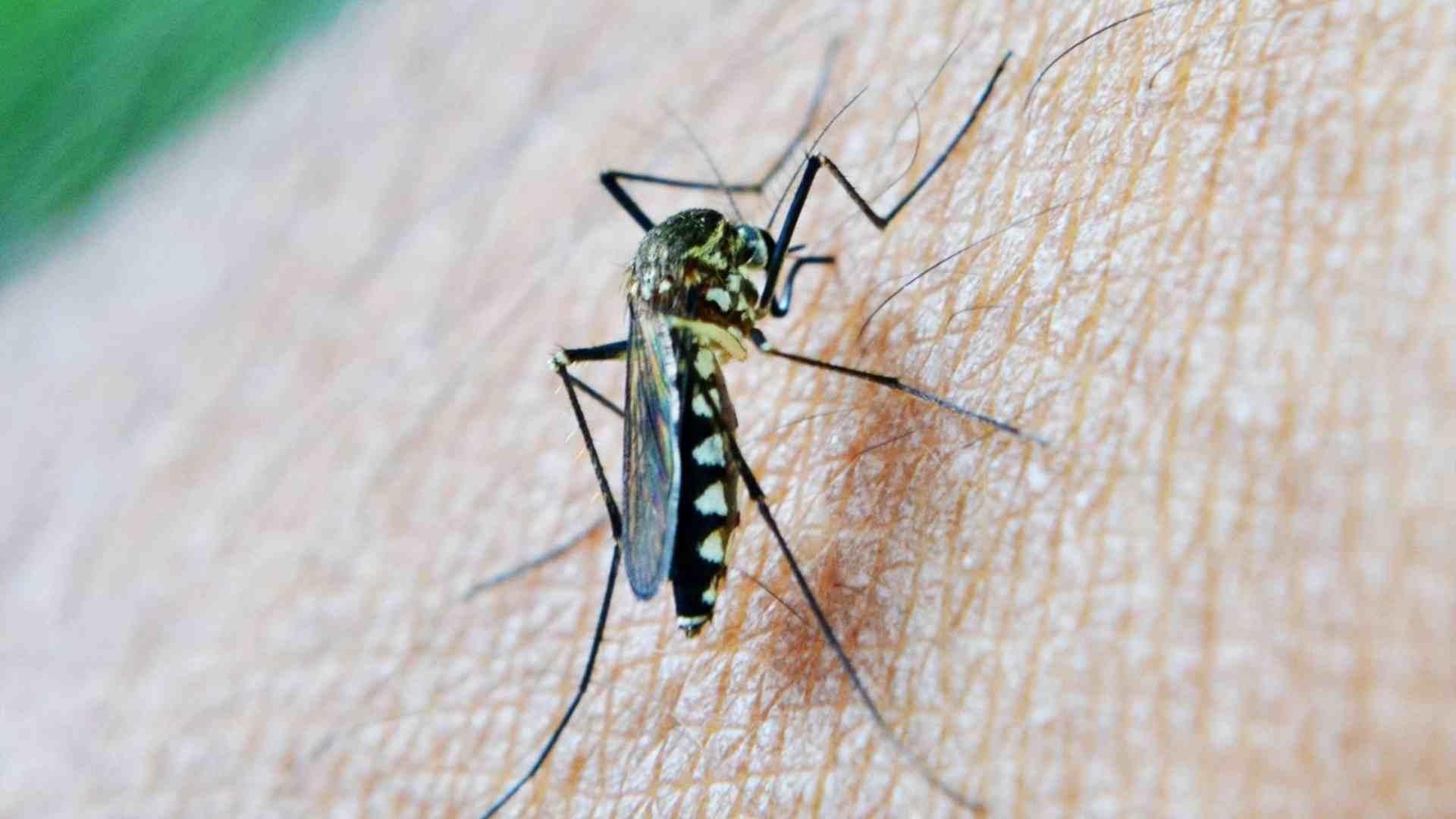 Fastidiose punture di zanzare ed insetti vari Qual è la soluzione migliore